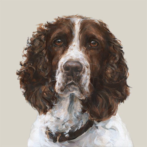 Springer Spaniel Limited Edition Print
