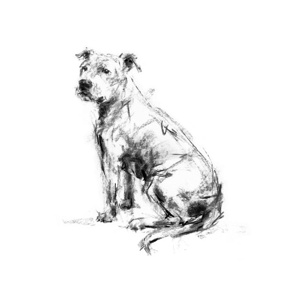 Staffordshire Bull Terrier, Staffy Sketch Print