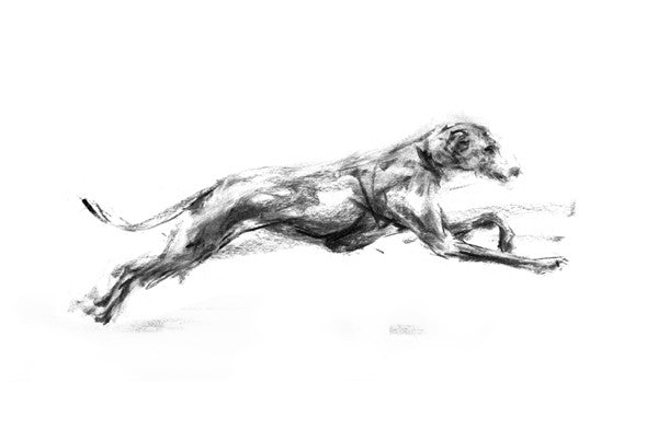 Supersonic Sighthound Sketch Print