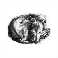 """Tucked In""  Whippet Sketch Print"