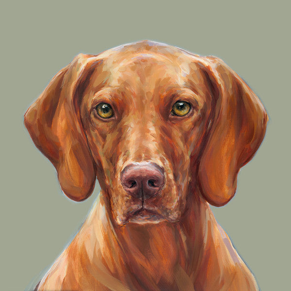 Vizsla Limited Edition Print