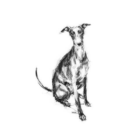 """Watchful"" Whippet Sketch Print"