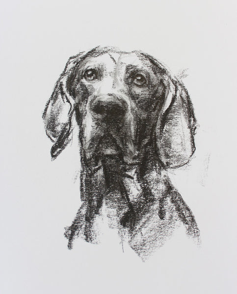 SOLD Weimaraner Portrait sketch ORIGINAL