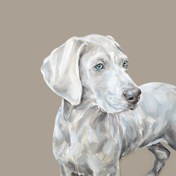 Weimaraner pup Limited Edition Print