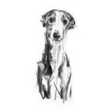 """Gentle"" Whippet Sketch Print"