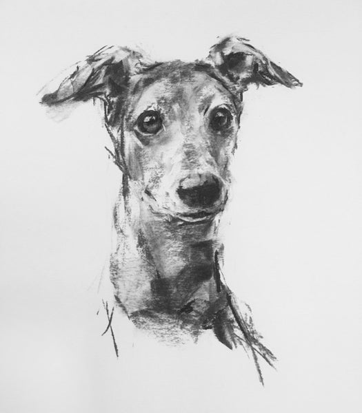 Charcoal Whippet Study sketch ORIGINAL