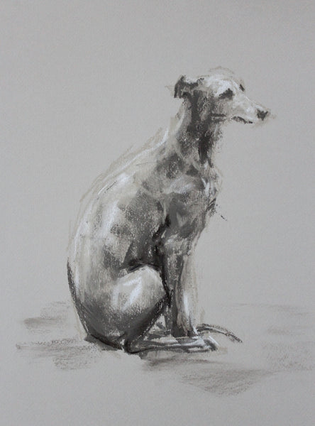 Whippet study pastel ORIGINAL dog drawing