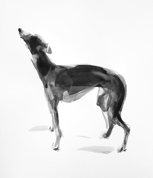 SOLD Whippet standing ink and wash drawing - ORIGINAL