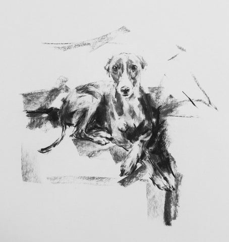 SOLD Whippet on Sofa Charcoal sketch ORIGINAL