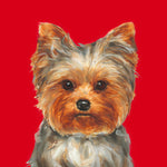 Yorkshire Terrier  Limited Edition Print