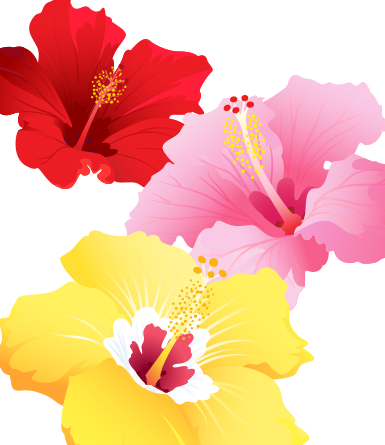 Hibiscus Variety Pack- vector