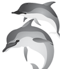 Spinner Dolphins- vector