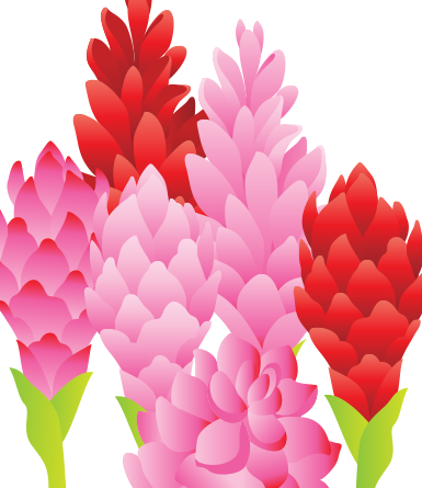 Floral Variety Pack 2- vector