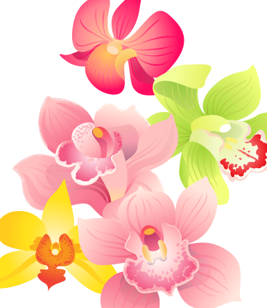 Orchid Variety Pack- vector