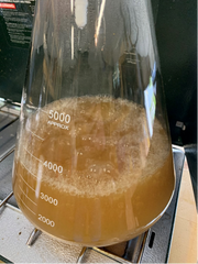 Boiling wort for yeast starter