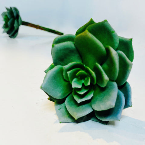 Echeveria Pick - succulent green