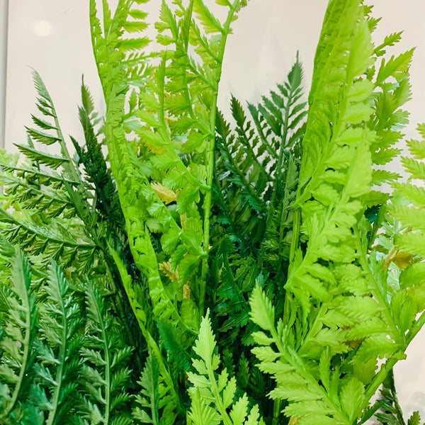 Fern Leather Bush 110cm
