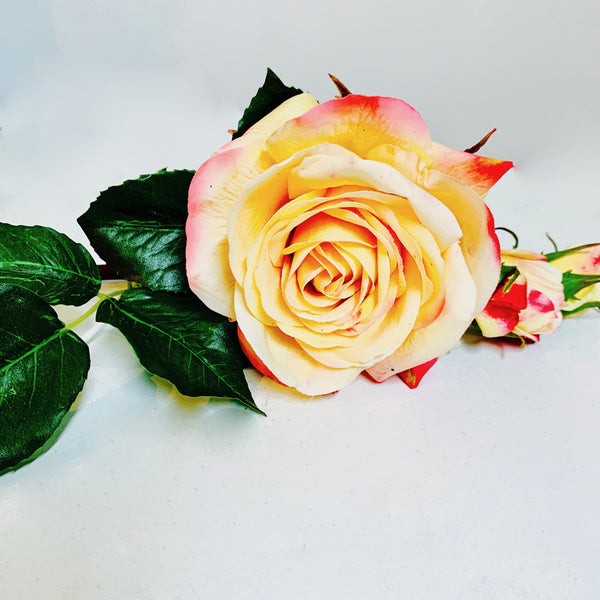 Peach Gold Rose - real touch