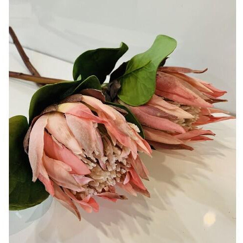 Protea King - Pink
