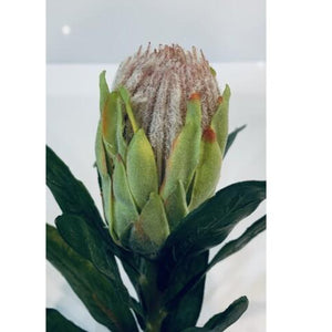 Native Protea green 58cm