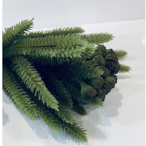 Brunia Foliage - Large