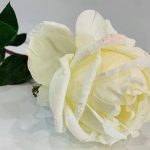 York Rose White 52cm