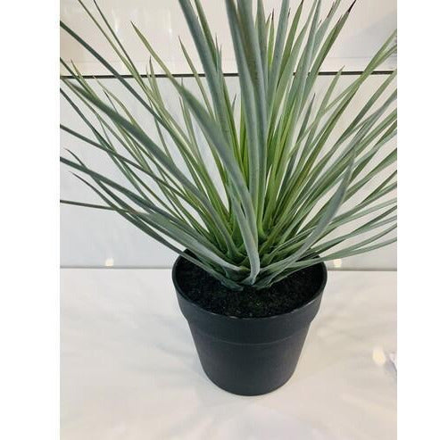 Spikey Grass Potted 38cm