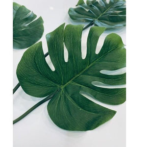 Monstera 3 Leaf
