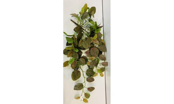 Fittonia Hanging Bush pnk/grn 66cm