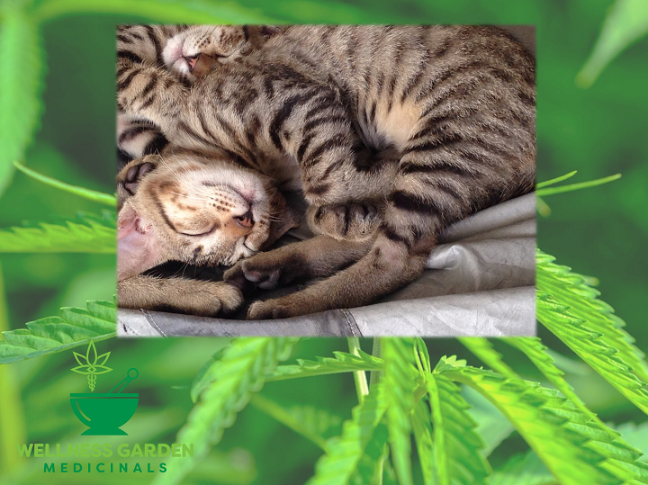 CBD Relief for Insomnia: Benefits, Side Effects, and Uses