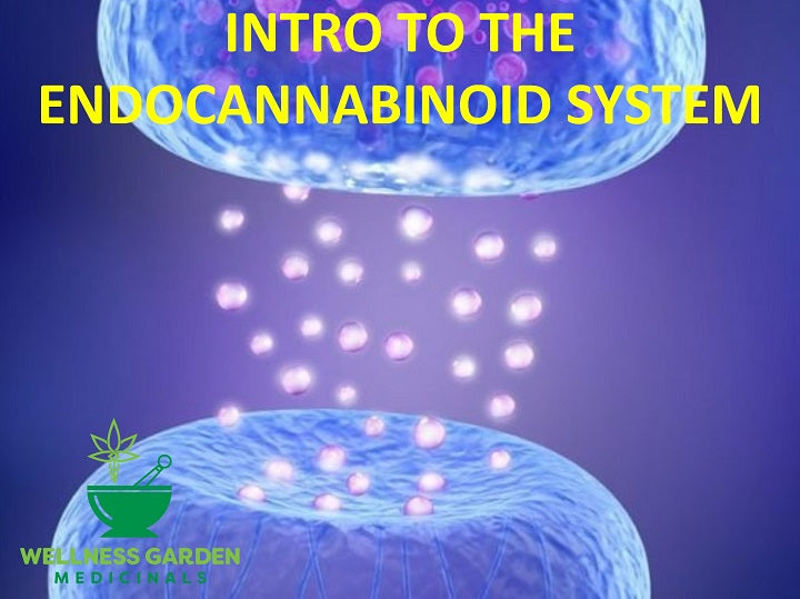 Introduction to the Endocannabinoid System