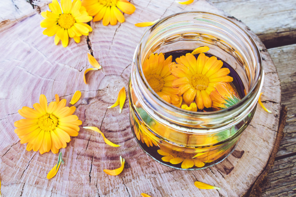 Jar of calendula flowers to be made into calendula extract to be used in CBD salve.