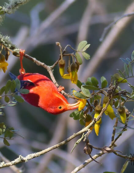 a picture of a bird on a branch eating something