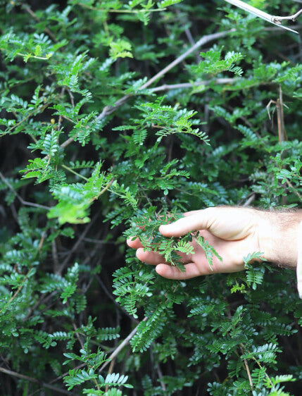a hand holding some loval flora on a hike