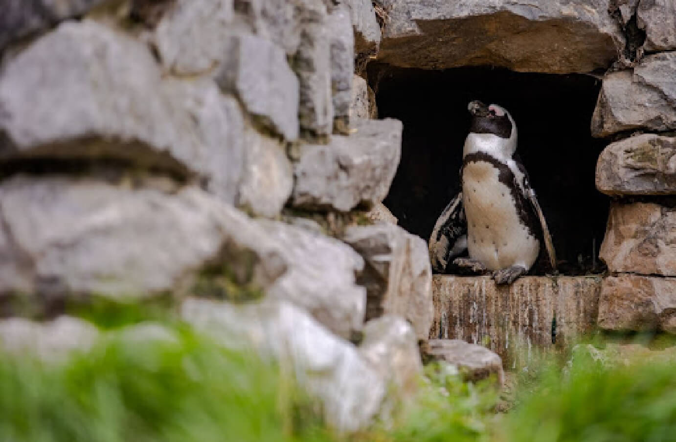 Photograph of a penguin sitting on a rock