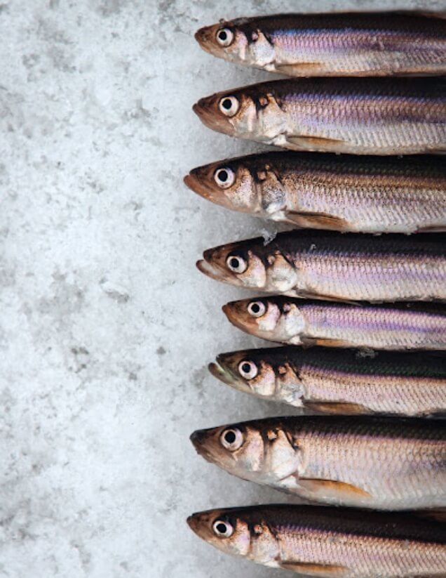 a row of laid out fish, lined up and organized