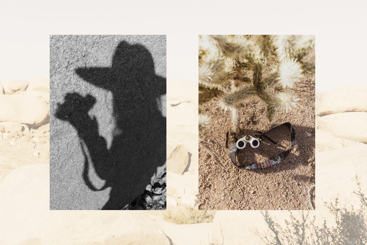 artistic image of Johnie Gall silhouette shadow, and Nocs near a cactus