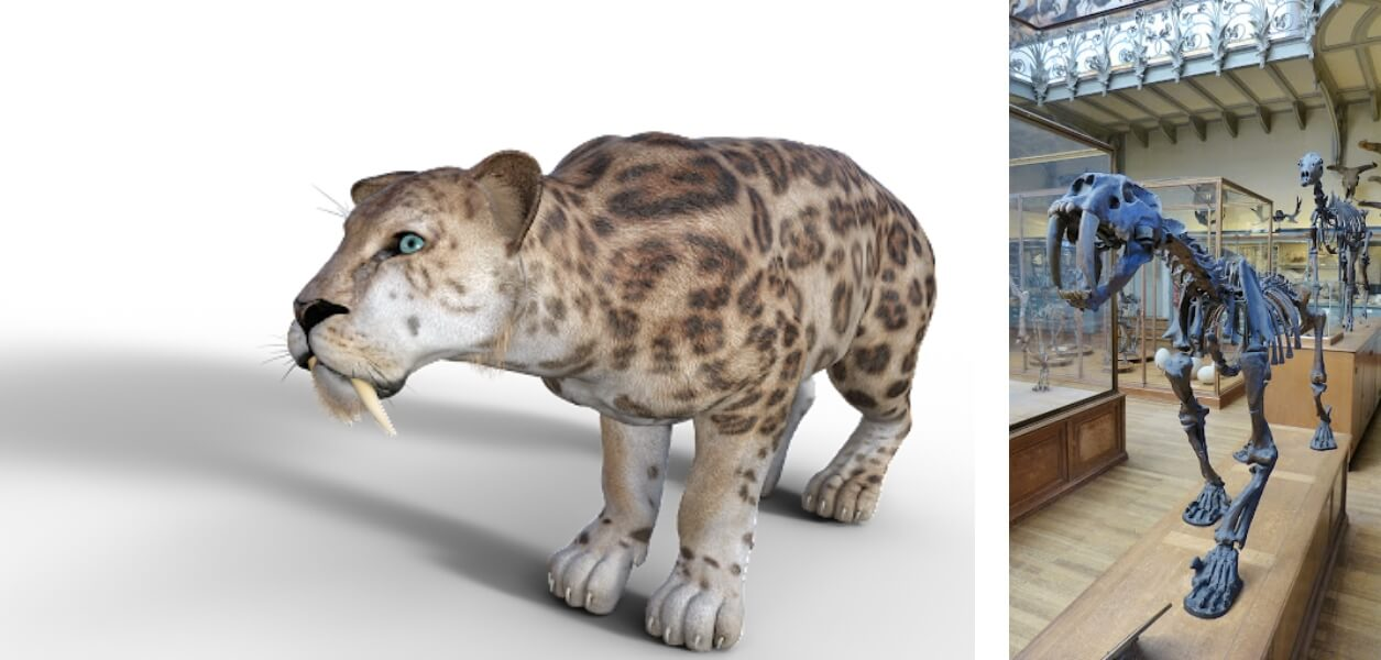 Digital Rendering of a saber toothed cat next to it'ss full skeleton