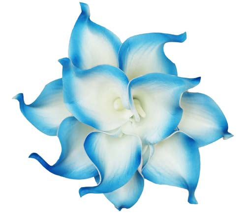 Royal Blue Tip Calla Stems - #A32 - $17.50