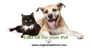 SHOULD I GIVE MY CAT OR DOG CBD???