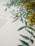 Signature Ketubah Design (Cotton Paper) Tuscany