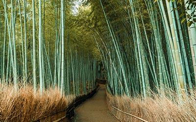 Bamboo pathway in Kyoto, Japan taken by Adam Dillon