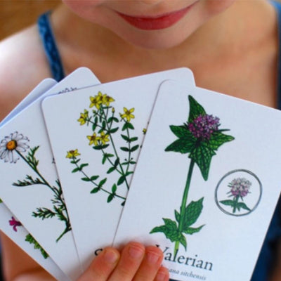 child holding white oversized game cards with illustrated herbs , starting with valerian