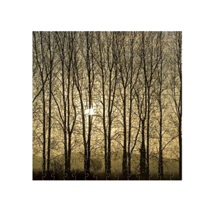 ZEN WOODEN JIGSAW PUZZLES POPLARS AT SUNRISE