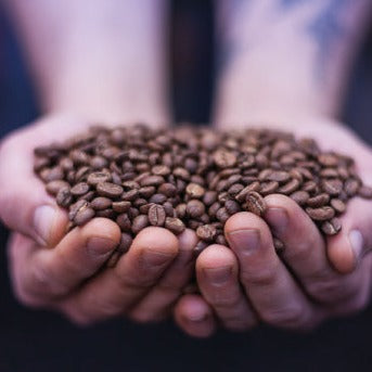 SCA - Introduction to Coffee Course