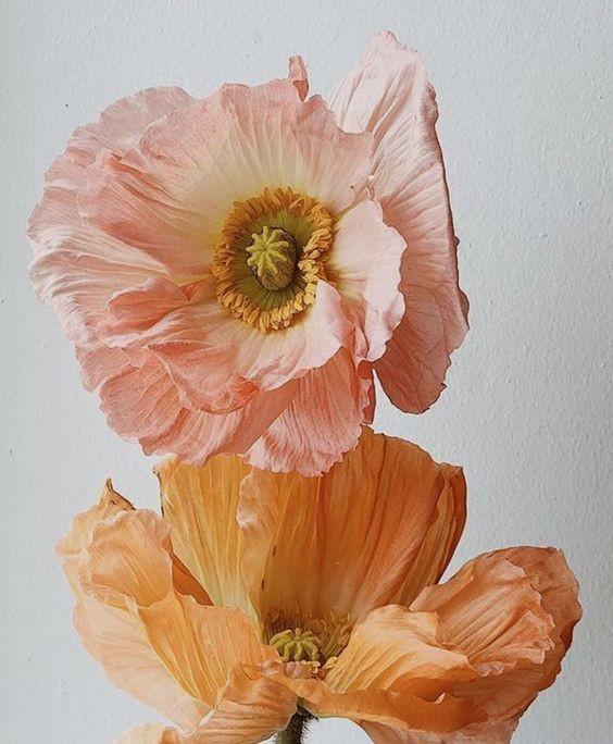 two flowers one pink one light orange