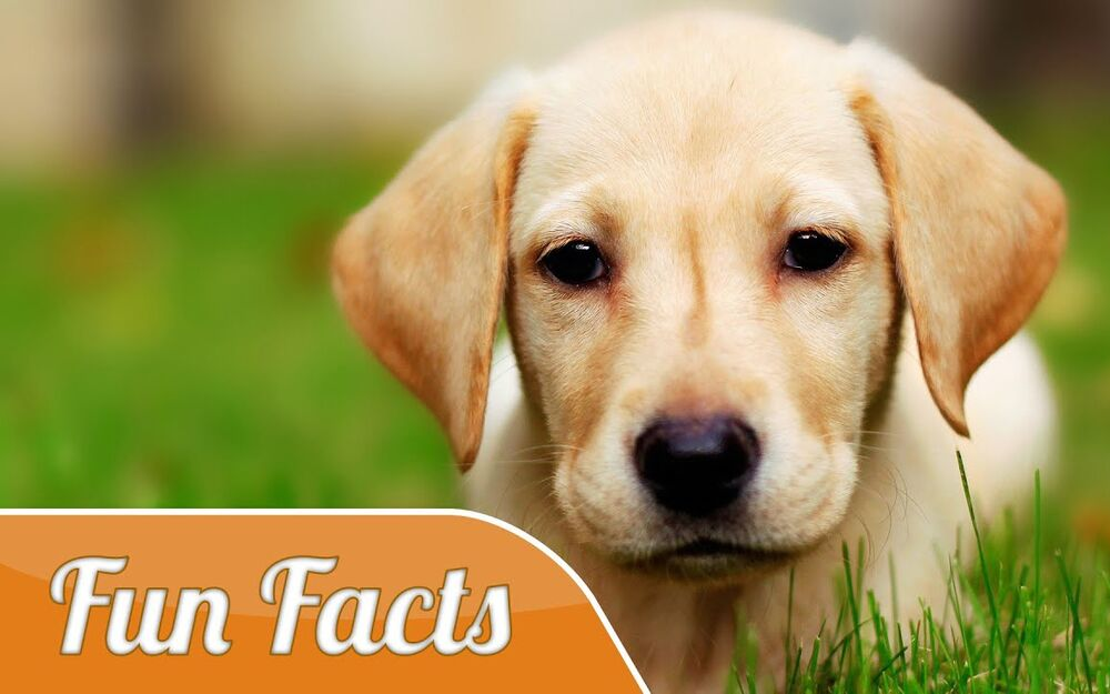 7 Dog Myths You Probably Didn't Know That Will Blow Your Mind