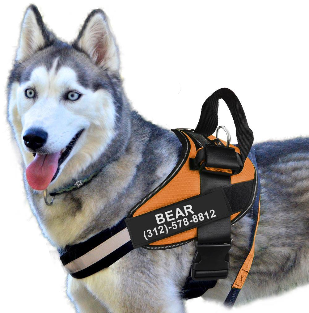 Personalized PawRoll™ Harness (2021)