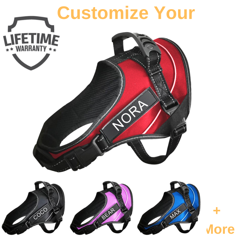 Personalized PawPro No Pull Dog Harness