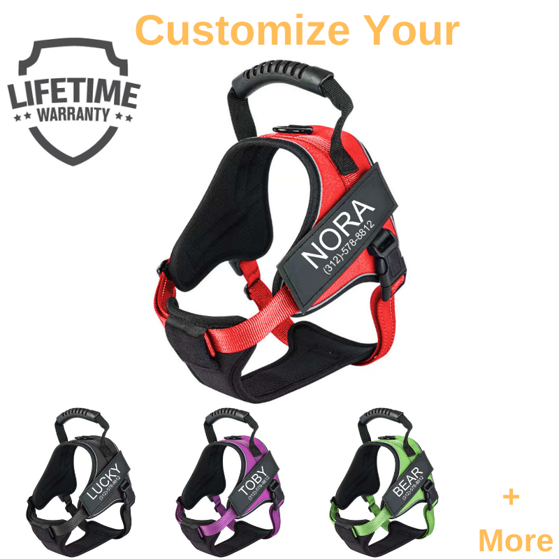 New Personalized PawLevi ™ No Pull Dog Harness (2020)